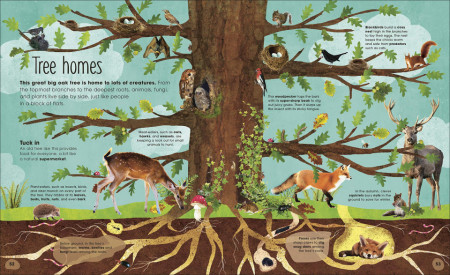 RHS The Magic & Mystery of Trees