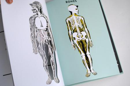Anatomy: A Cutaway Look Inside the Human Body