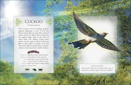 The Little Book of Woodland Bird Songs