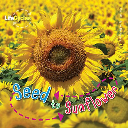 Lifecycles: Seed to Sunflower