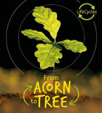 Lifecycles: Acorn to Tree