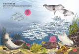 National Trust: Sharks, Seahorses and other British Sea Creatures (National Trust Sticker Spotter Bo