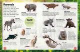 Sticker Encyclopedia Baby Animals