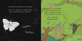 Secrets of the Rainforest: A shine-a-light book