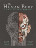 The Human Body: A Pop-Up Guide to Anatomy