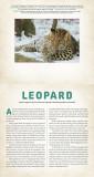 Wild. A Photicular Book