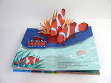 What's in the Egg? Pop-up Book