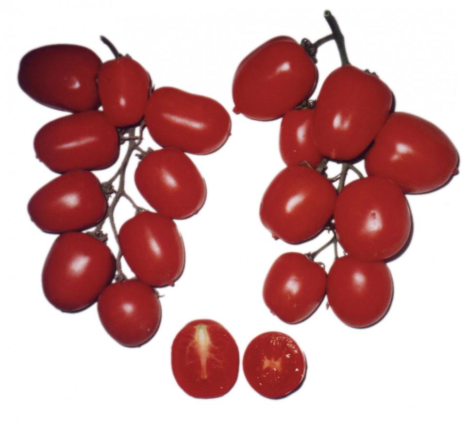 Pautalia (300 seminte) de rosii semi-timpurii, semi-determinatede, pantru camp, la IZK Bulgaria