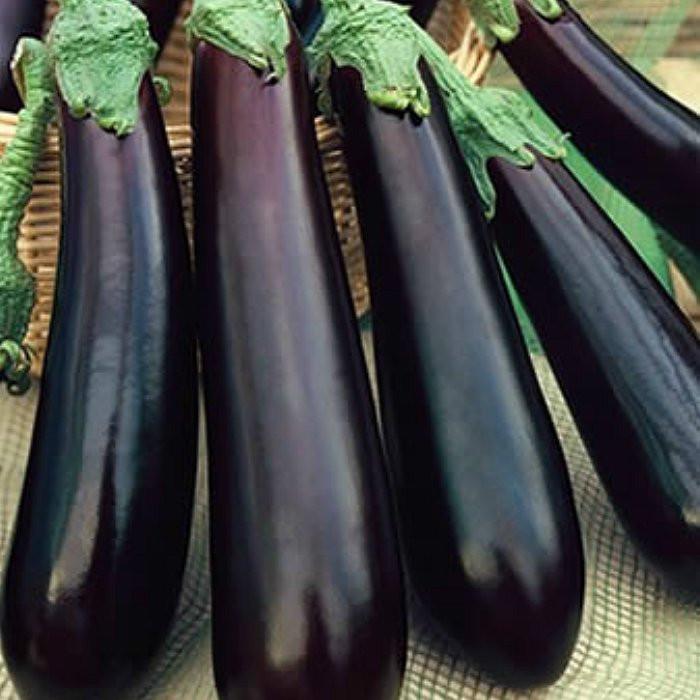Violetta lunga(400 seminte) de vinete lungi, violet inchis , Prima Sementi