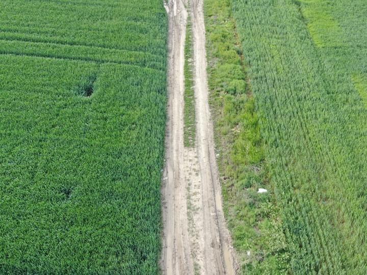 Naturamin-WSP fertilizator de ultima generatie cu 80% aminoacizi liberi (0.5 kg), biostimulare a cresterii si dezvoltarii plantelor in toate fazele