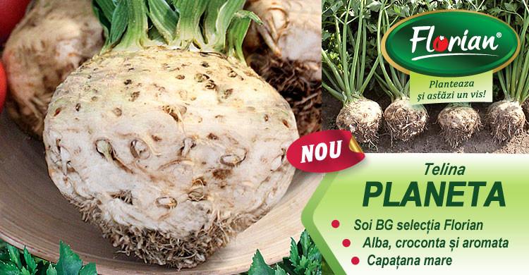 Telina Planeta (2 gr) seminte de telina capatana foarte mare tip gigant, soi bulgaresc, Florian