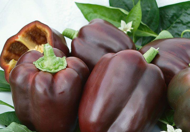 Ardei gars Sweet Chocolate (30 seminte) culoare atractiva, gust deosebit, soi extratimpuriu, Agrosem