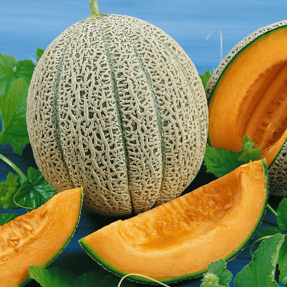 Hale's Best Jumbo(70 seminte) de pepene galben soi timpuriu, miez portocaliu, zemos, gust placut, Prima Sementi