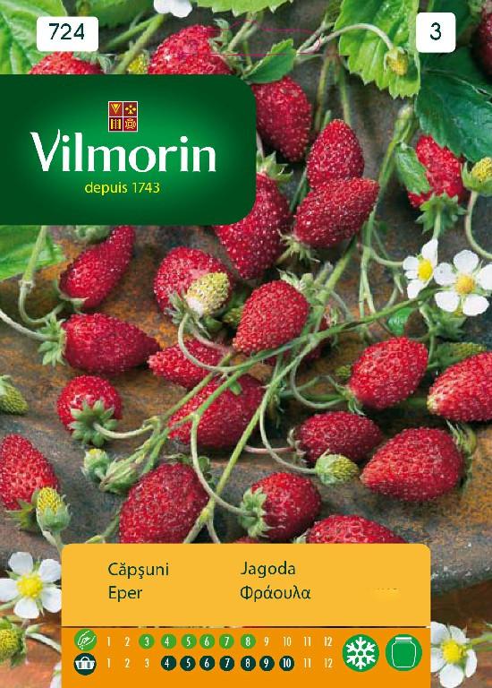Seminte de Capsuni, soi cu productivitate ridicate cu fructe foarte gustoase, Vilmorin