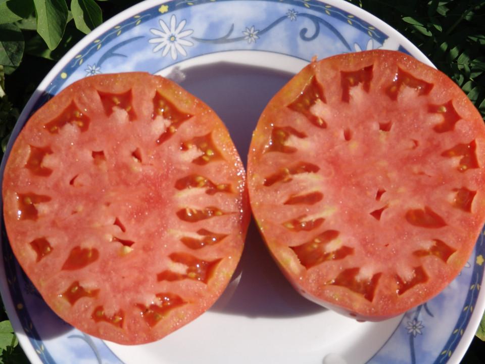 INIMA DE MIERE F1 ( HONEY HEART) – 1 gr – Seminte rosii nedeterminate Superior Serbia