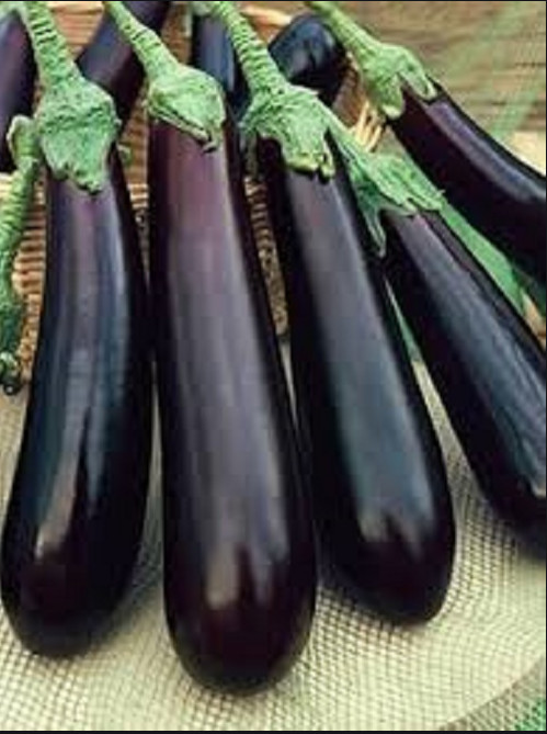 Long Purple (1 gr) seminte de vinete soi timpuriu, violet inchis, Opal