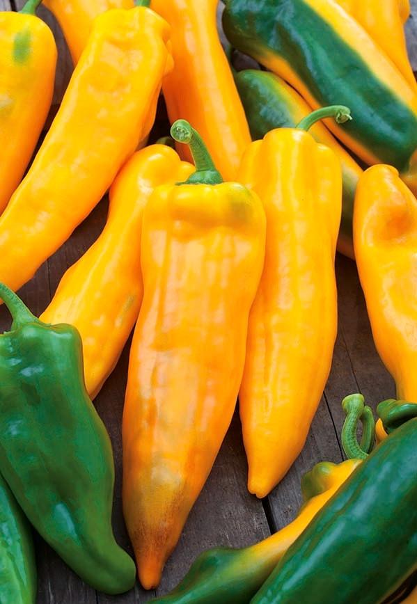 Ardei lung Corno di Toro Giallo (70 seminte) de ardei galbeni, fructe atarnate, conice, lungi, Florian