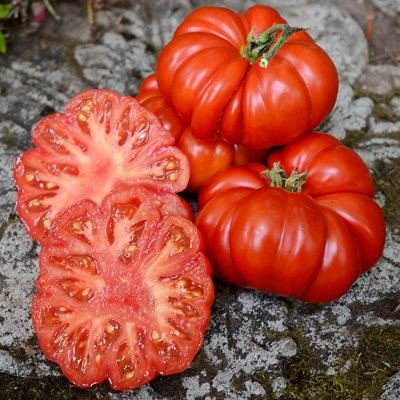 Costoluto Fiorentino (150 seminte) rosii crete soi productiv, Agrosem