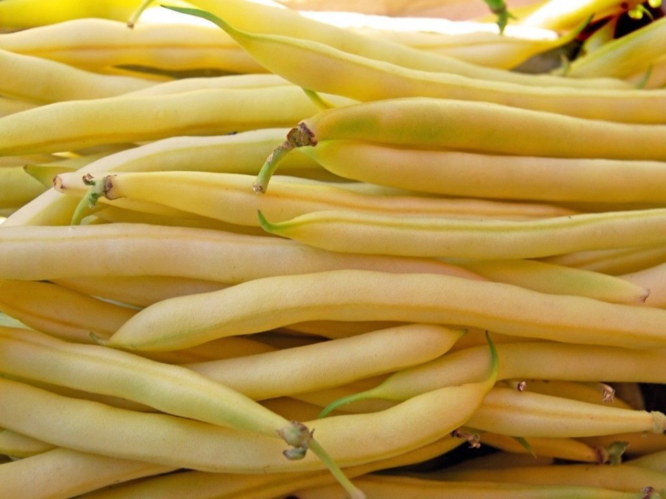 Kentucky Wonder Wax (1 kg) seminte de fasole urcatoare galbena rotunda, Agrosem