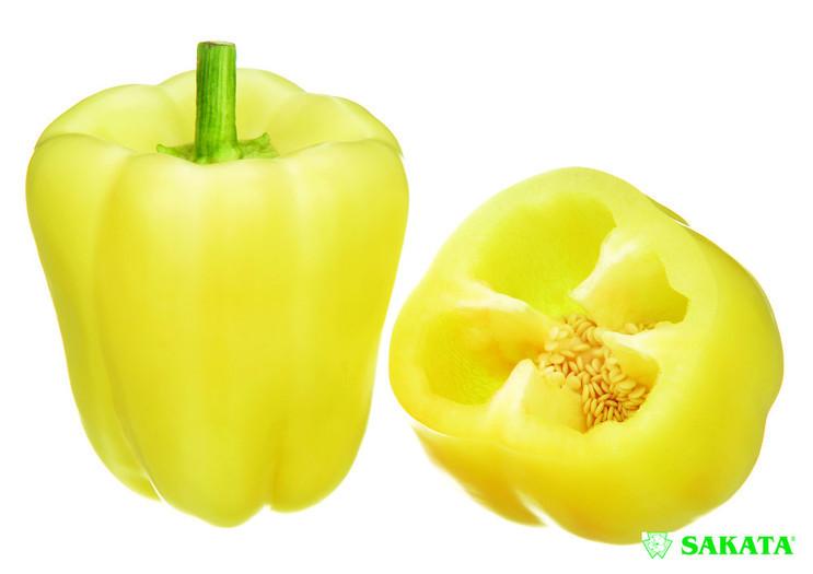 Salana F1 (500 seminte) ardei gras tip blocky, productie mare, Sakata