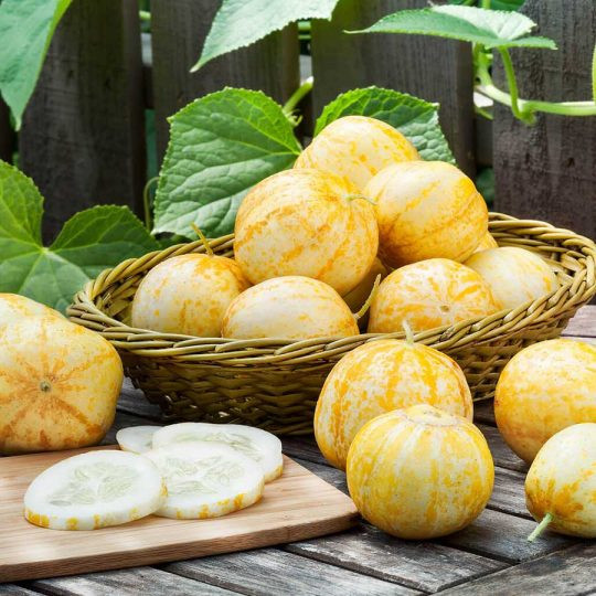 Castravetii Lemon-Apple seminte de catraveti exotici, Vilmorin