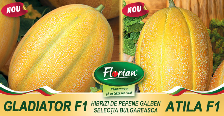 Gladiator F1 (120 seminte) de pepeni galbeni bulgaresti, tip feliat, semi-timpuriu, fruct mare, Florian Bulgaria