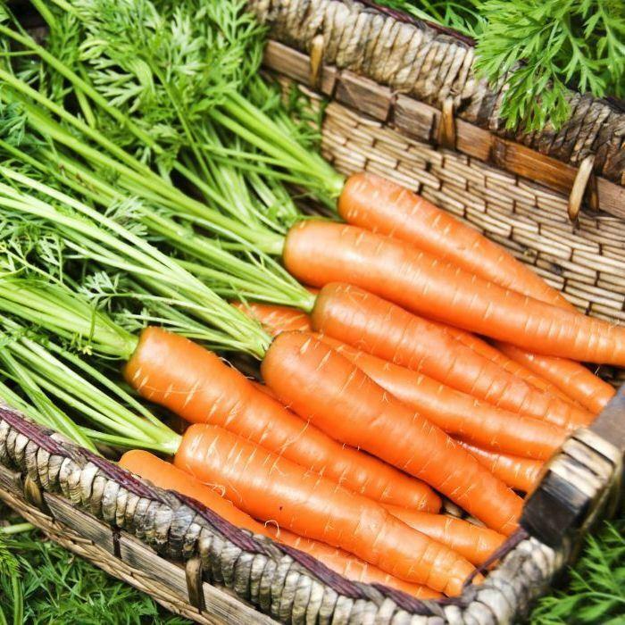Berlicum (5 gr) seminte morcovi soi semi-tardiv, Agrosem