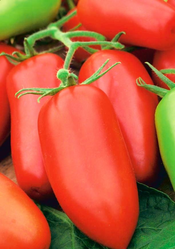 Piramide (150 seminte) tomate lungi semitimpurii in forma de ardei, Agrosem
