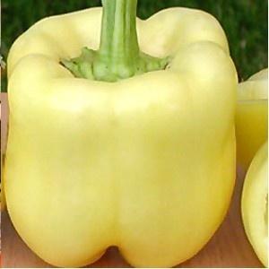 Ardei gras Belladonna F1 (500 seminte), galben-alb, Seminis