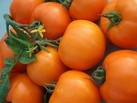 Bendida F1 – 50 sem – Seminte Rosii Bendida Semitimpurii culoare portocaliu intens de la Geosem Bulgaria