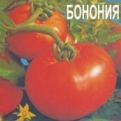 BONONIA Seminte de Rosii Bulgaresti / Soi rosii consum proaspat / Bulgaria