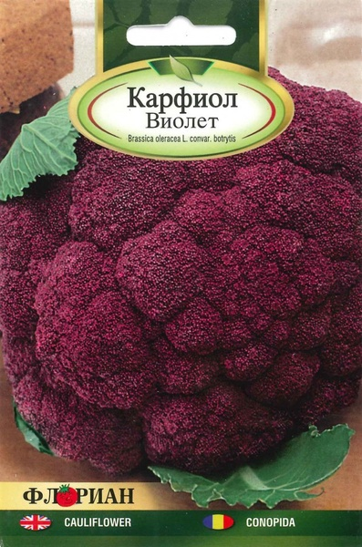 Conopida VIOLET - 1.5 gr - Seminte de conopida Florian Bulgaria Soi timpuriu culoare violet