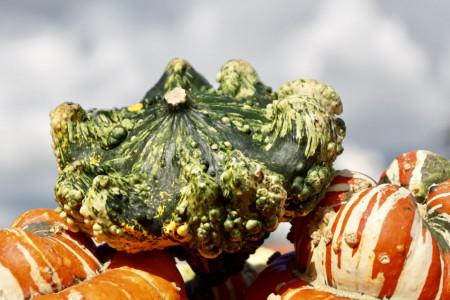 Dovleac decorativ Crown Mix (1 g), seminte de Tartacute dovleac decorativ in forma de coroana si in diferite combinatii de culori, Kertimag