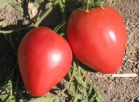 Inima de Bou Roz (0.5 gr) seminte rosii soi semitimpuriu nedeterminat, Florian
