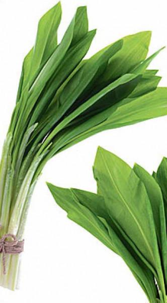 Leurda Medicinala (0.2 gr) de leurda, denumita si usturoi salbatic, cu gust si aroma de usturoi, Agrosem