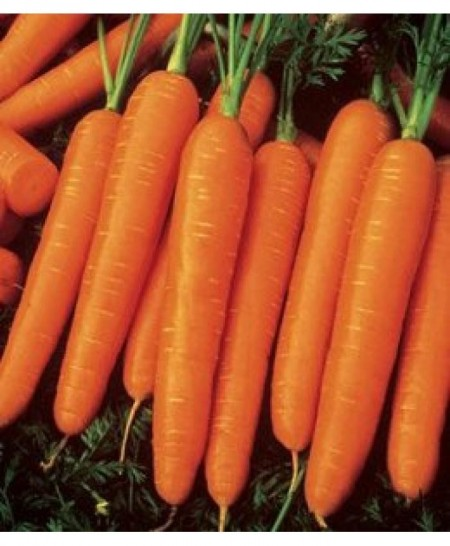 Nt3 Tam Tam - 500 grame - Seminte de morcov ce prezinta uniformitate si randament ridicat de la Clause