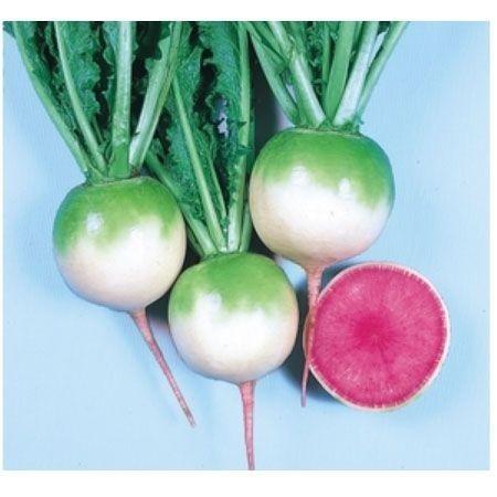Red Meat - 25 grame - Seminte de ridichi forma rotunda si radacina alba cu guler verde de buna calitate pentru salate si gatit de la Takii Seeds