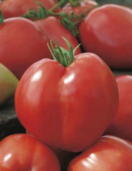 Rosii Inima de Bou Rosu (1 kg), seminte de tomate soi rustic fructe mari, semideterminate, Agrosem