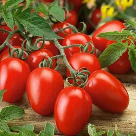 Rosii RIO GRANDE - 1 gr - Seminte Tomate Florian Bulgaria Soi semitimpuriu