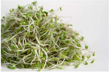 Seminte bio pentru germeni de broccoli (15 g), seminte pentru obtinerea de germeni sau micro-verdeturi de broccoli, Kertimag