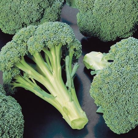 Seminte broccoli Chevalier F1 (1000 seminte), semitimpuriu, Seminis