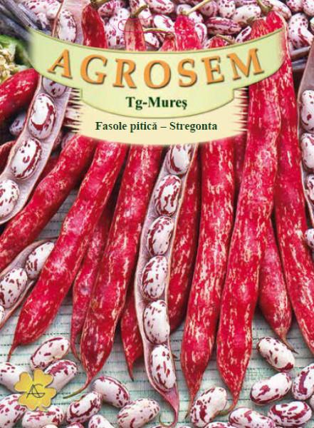 Stregonta (25 kg) seminte de fasole pitica pentru boabe, culoare tarcata, soi romanesc, Agrosem
