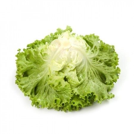 Tourbillon - 1000 sem - Seminte drajate de salata tip Batavia ce se preteaza a fi cultivata cu primavara devreme si pana toamna cu frunze  verde deschis si aspect excelent de la Rijk Zwaan