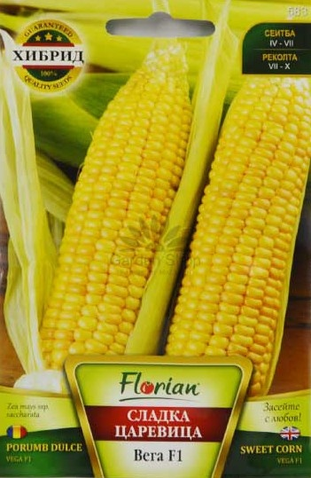 Vega porumb dulce (Zaharat) - 10 gr - Seminte de Porumb Dulce (Zaharat) Hibrid Timpuriu foarte dulce