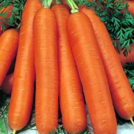 Berlicum (1 kg) seminte morcovi soi semi-tardiv, Agrosem