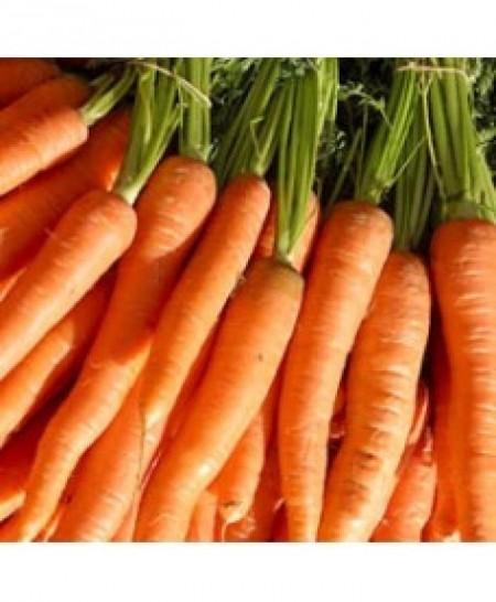 Brillyance F1 - 100.000 sem - Seminte de morcovi ce prezinta buna toleranta la boli foliare de la Nunhems