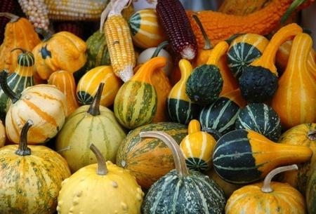 Dovlecei Decorativi - Tartacute 5 - 1 gr - Seminte de Dovlecei Decorativi Planta anuala agatatoare cu forme si culori variate