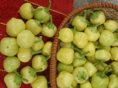 Gogosar Mic Iute (Liuti Kambichki) 50 gr seminte de Ardei Iute tip Gogosar Mic Iute de la Opal