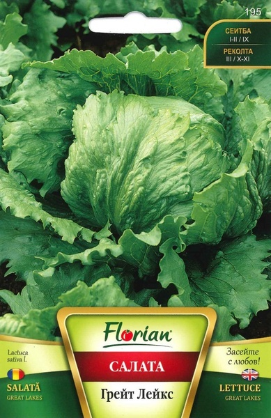 Great Lakes - 50 gr - Seminte de Salata tip AISBERG Great Lakes soi foarte productiv Florian Bulgaria