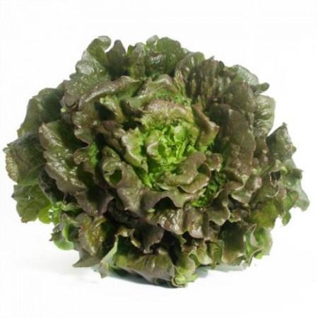 Maravilla de Verano (2 gr) seminte de salata frunze roscat-verzui, usor ondulate, crocante si foarte gustoase, Agrosem